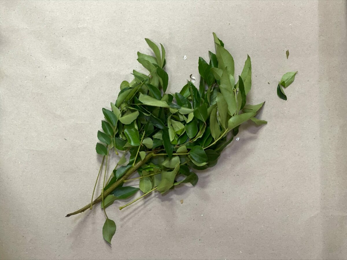 Frische Curry Blätter - Fresh Curry Leaves