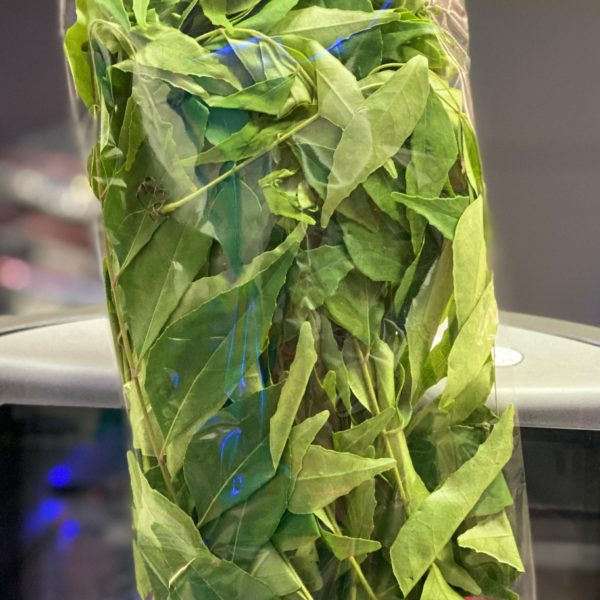 Fresh Curry Leaves, Frische Curry Blätter